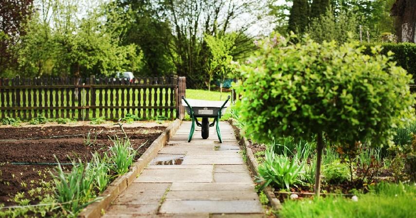 Siapkan lahan di tempat yang terpapar sinar matahari - 5 Cara Menanam Buah Organik di Rumah Mudah dan Banyak Manfaatnya