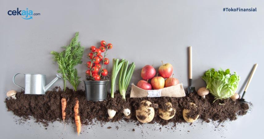 Peralatan Budidaya Sayuran Organik