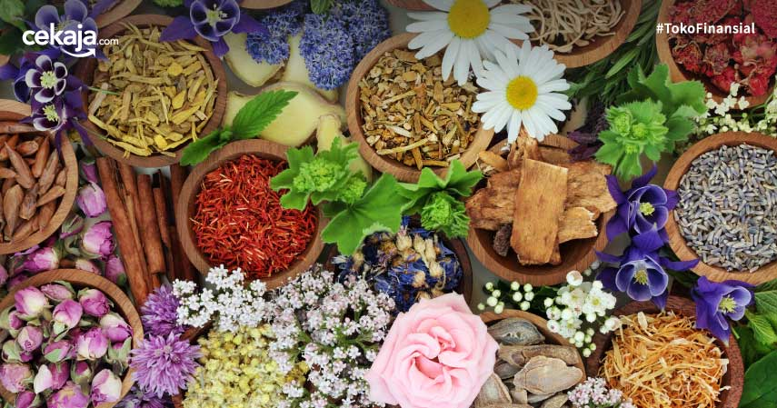20 Daftar Tanaman Obat Beserta Manfaatnya Untuk Kesehatan