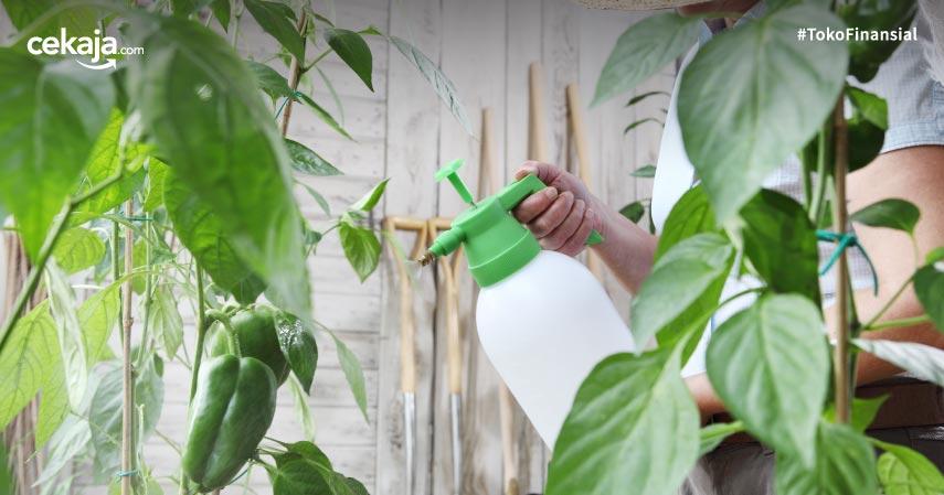 Cara Membuat Pestisida secara Alami ini Dijamin Mudah dan Murah