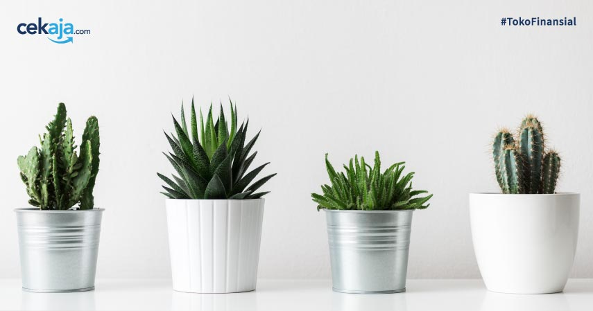 8 Cara Merawat Kaktus yang Tepat Agar Tidak Cepat Mati