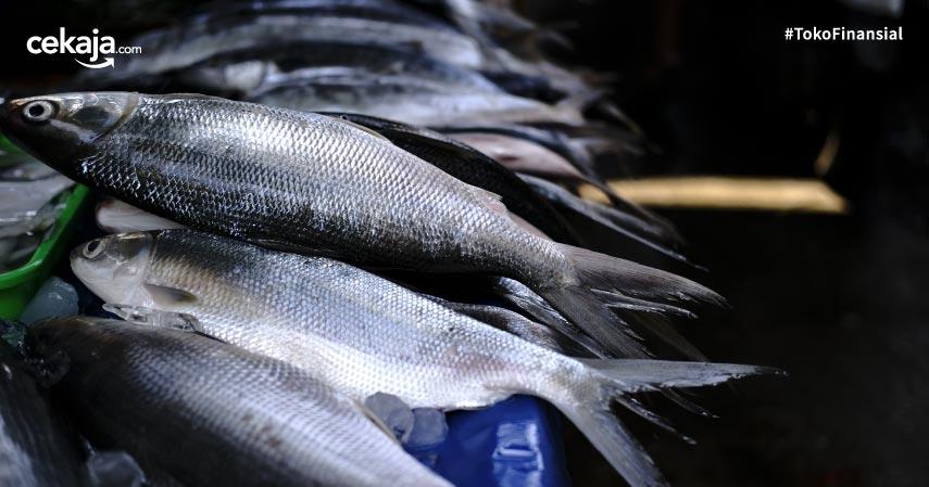 10 Manfaat Ikan Bandeng yang Lezat dan Kaya Gizi