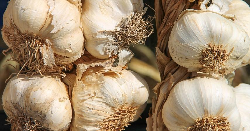 Bawang Putih - 12 Cara Menghilangkan Panu di Wajah Secara Alami