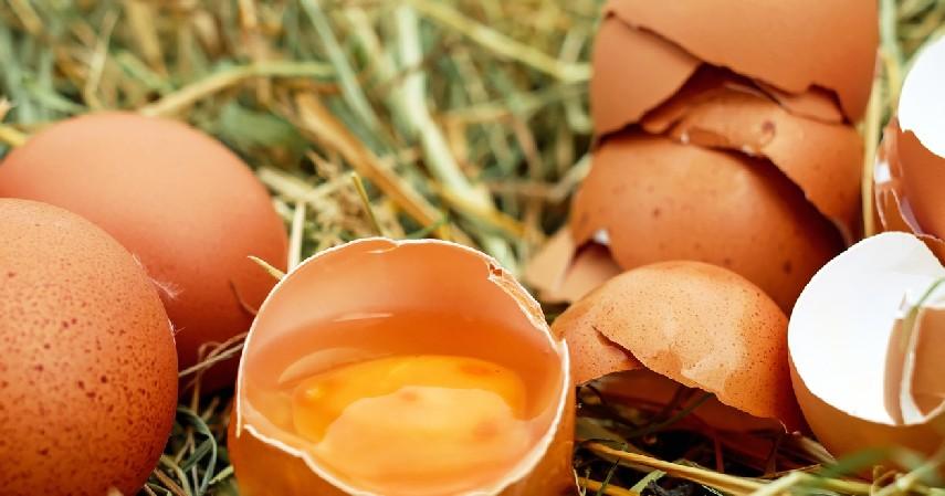 Cara Mengusir Semut dengan Kulit Telur