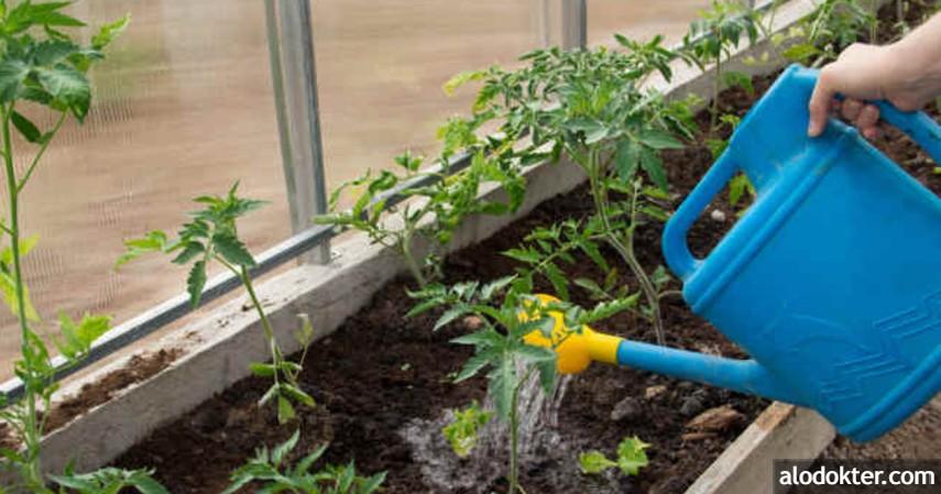 Kelebihan dan Kekurangan Pestisida Alami