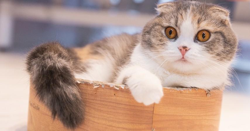Kucing Munchkin - 7 Hewan Peliharaan Unik Milik Selebgram Hingga Idol Kpop