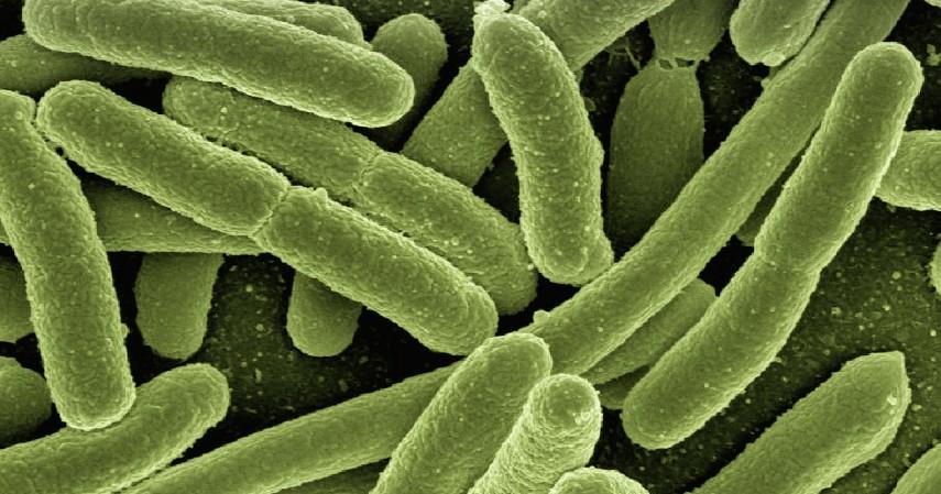 Membasmi Virus dan Bakteri - 7 Manfaat Air Purifier Ini Baik untuk Kesehatan Tubuh