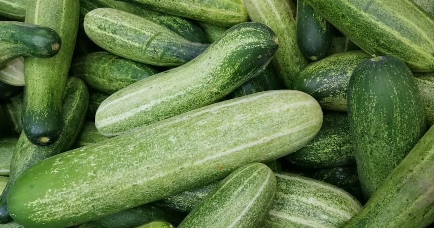 Mentimun - 12 Makanan untuk Membakar Lemak Bantu Turunkan Berat Badan