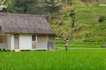 7 Peluang Bisnis di Pedesaan yang Bisa dimanfaatkan Saat Pandemi