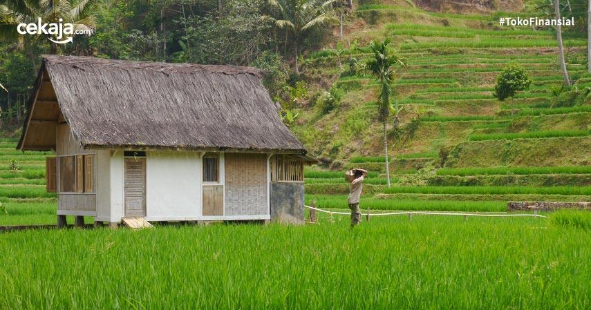 peluang bisnis di pedesaan