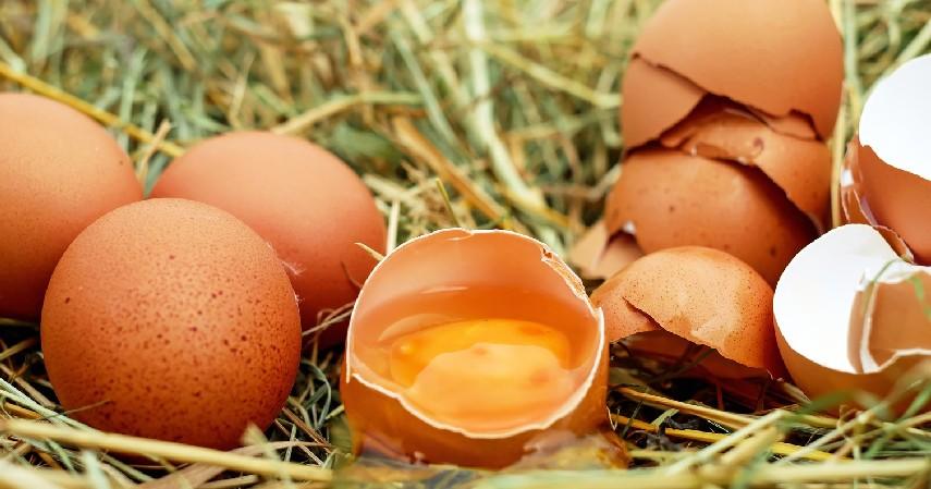 Kandungan Telur - Segini Jumlah Telur yang Aman Dikonsumsi Dalam Sehari