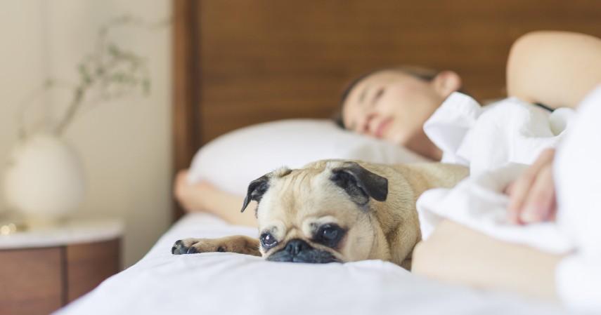 Menangani Insomnia - 10 Manfaat Tidur Siang yang Bantu Jaga Kesehatan Tubuh