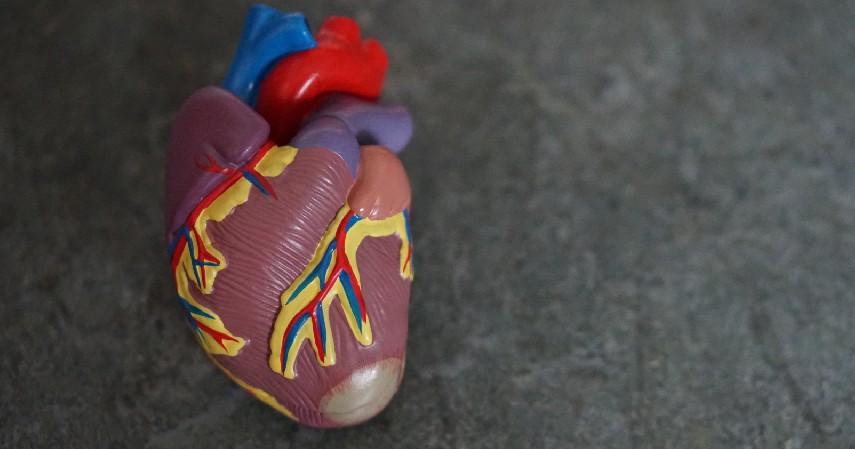 Penyakit Jantung - 6 Penyakit dengan Biaya Pengobatan Termahal
