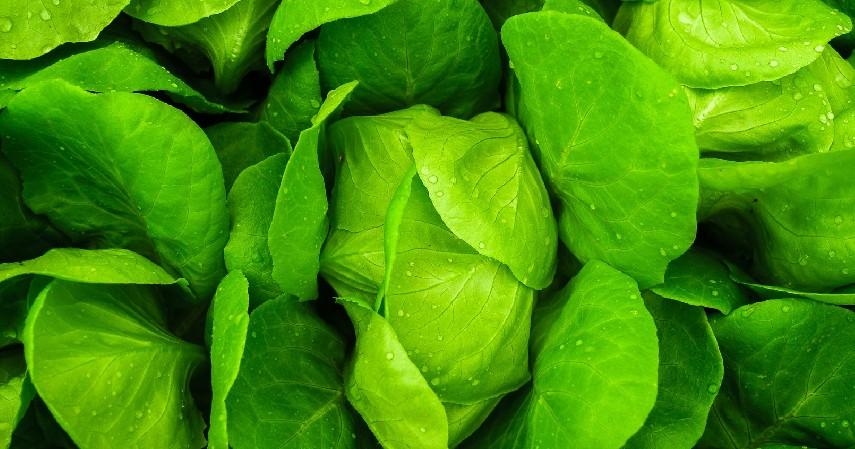Sayuran Hijau - 10 Bahan Alami untuk Detox Tubuh Paling Manjur