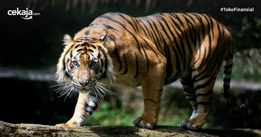 15 Daftar Hewan yang Terancam Punah di Indonesia, Yuk Bantu Jaga dan Lestarikan!