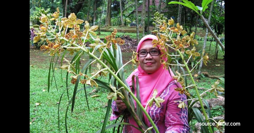 Anggrek Tebu - Daftar Bunga Langka dan Dilindungi di Indonesia, Hampir Terancam Punah.jpg