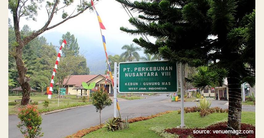 Agrowisata Gunung Mas - Rekomendasi Tempat Camping di Bogor Paling Hits