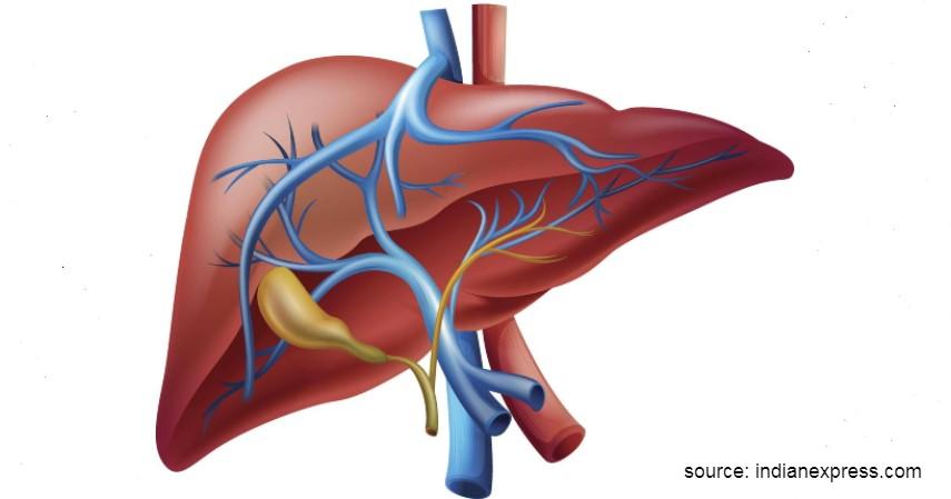 Hati (Rp2,1 Miliar) - 9 Daftar Harga Organ Tubuh Manusia yang Paling Banyak Diperjualbelikan di Pasar Gelap