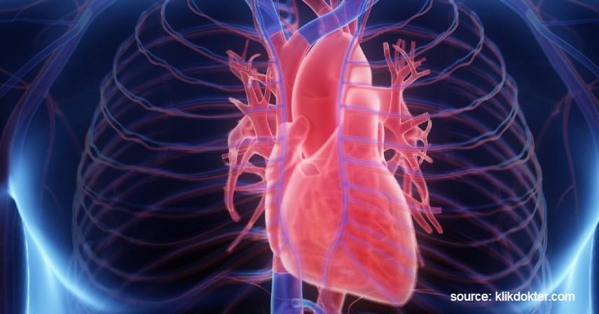 Jantung (Rp1,6 Miliar) - 9 Daftar Harga Organ Tubuh Manusia yang Paling Banyak Diperjualbelikan di Pasar Gelap