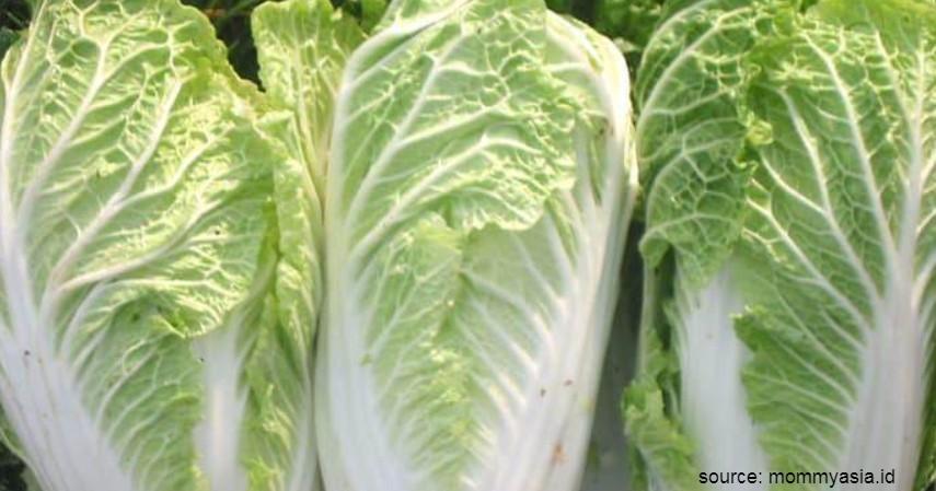 Jenis Sayuran Tinggi Protein - Sawi