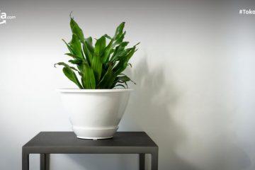 6 Cara Menanam Jagung di Rumah dengan Pot yang Dijamin Mudah