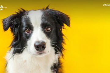 7 Tips Memilih Anjing Peliharaan untuk Pemula