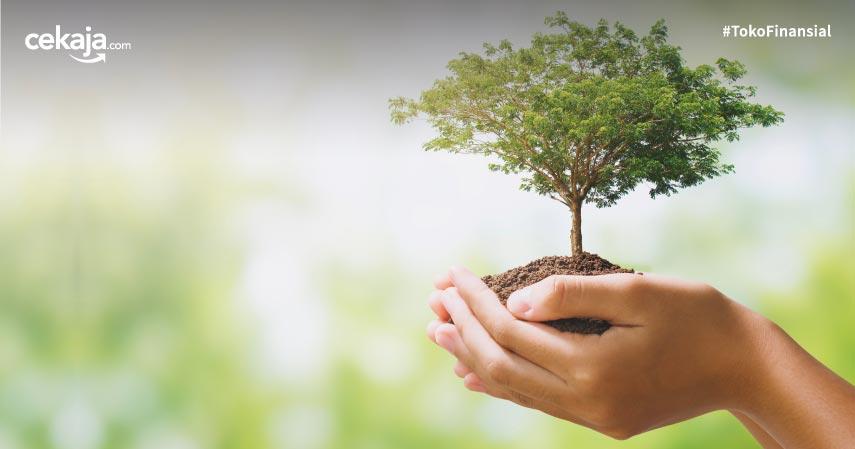 Manfaat Pohon bagi Kehidupan dan Cara Melestarikannya