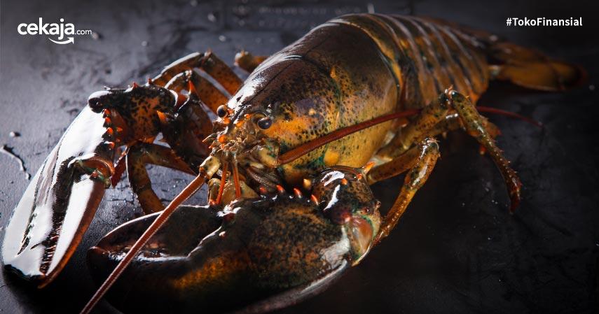 6 Cara Budidaya Lobster Air Tawar dan Laut yang Bawa Keuntungan Besar