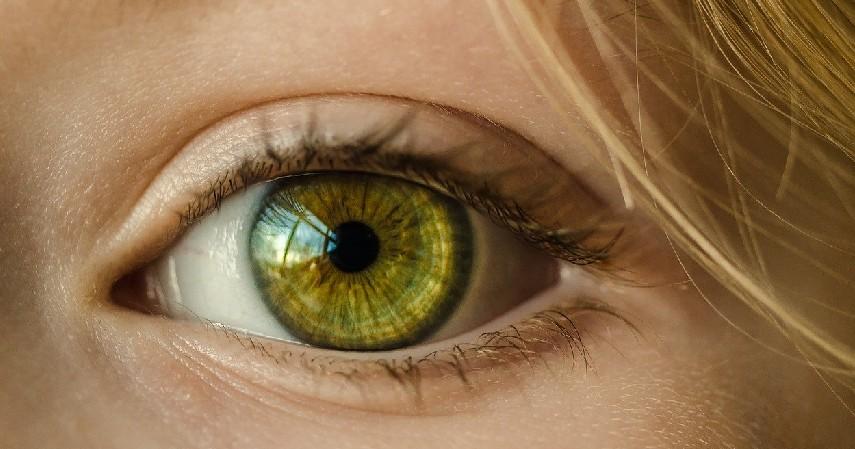 Menjaga kesehatan mata - 9 Manfaat Buah Carica untuk Kesehatan Tubuh, Kulit dan Mata.jpg