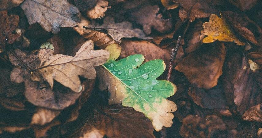 Membakar daun kering - 10 Cara Mengusir Tokek di Rumah, Beneran Efektifkah_.jpg