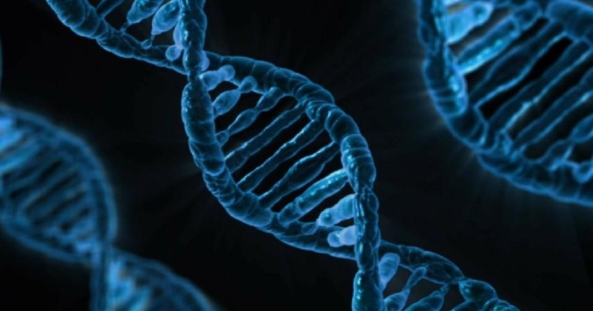Genetik - Gejala, Ciri, dan Penyebab Usus Buntu.jpg