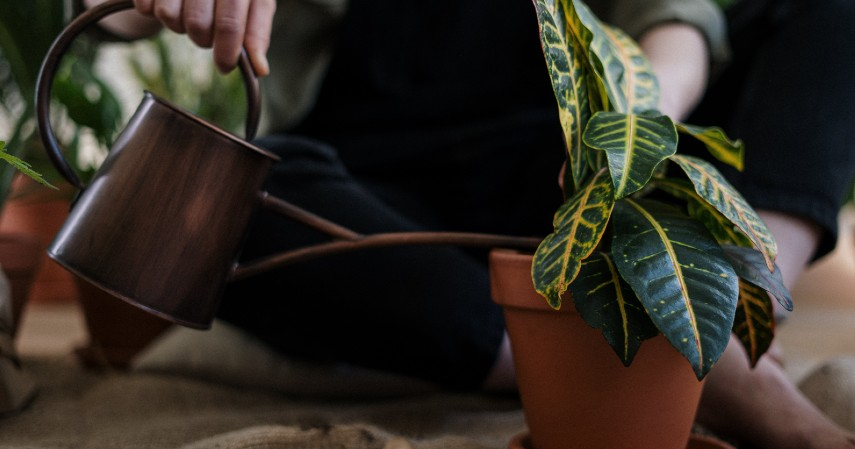 Berkebun - Libur Panjang Akhir Tahun Dipangkas Ini Ide Kegiatan Seru di Rumah Aja