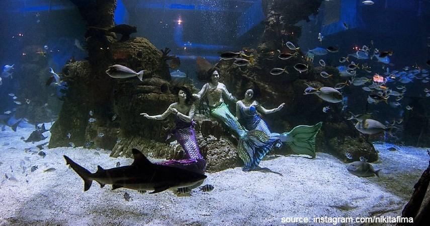 Jakarta Aquarium - 13 Tempat Wisata Anak di Jabodetabek