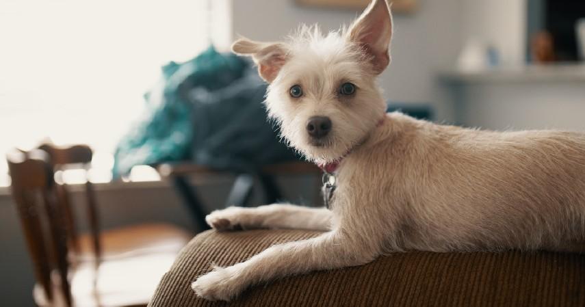 Jenis Bulu - 7 Tips Memilih Anjing Peliharaan untuk Pemula