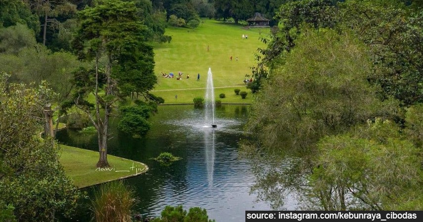 Kebun Raya Cibodas - 5 Lokasi Piknik di Bogor yang Damai dan Asri