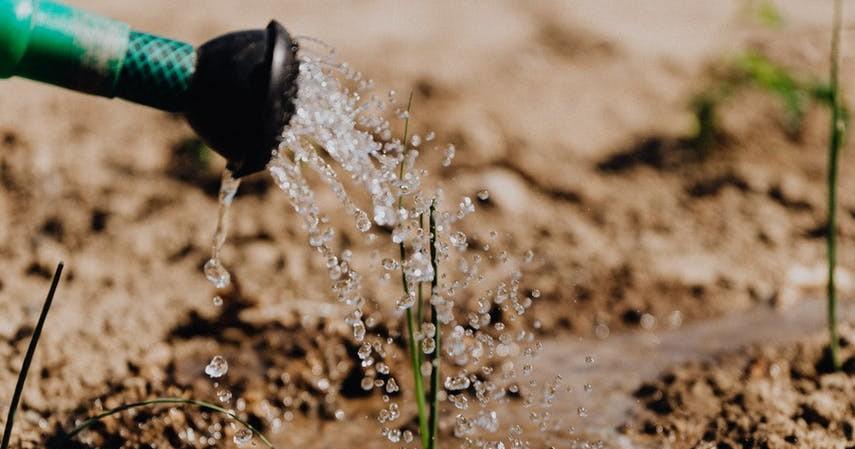 Manfaat Air Bekas Cucian Beras - Menyuburkan Tanaman