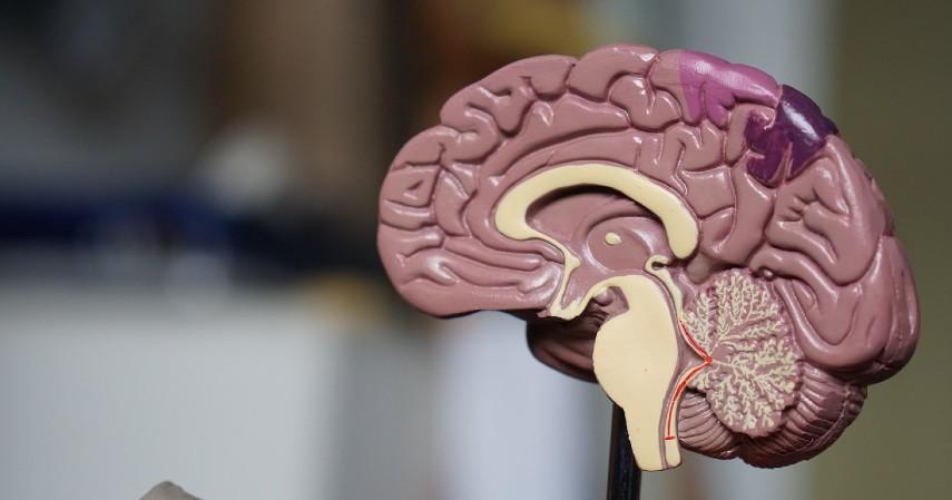 Manfaat Buah Labu - Memelihara Fungsi Otak