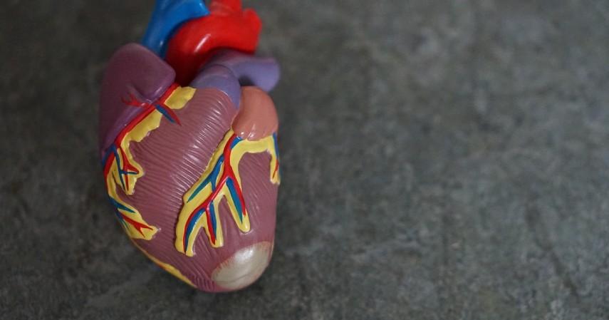 Manfaat Buah Labu - Mencegah Penyakit Jantung