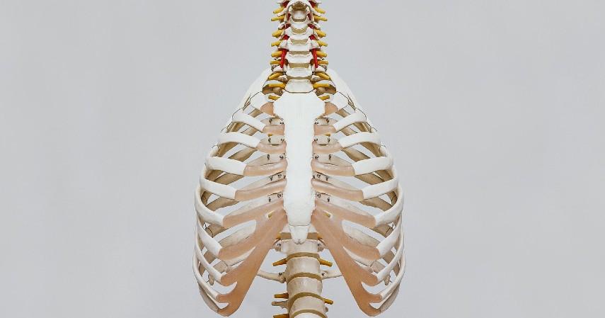 Manfaat Buah Labu - Menjaga Kesehatan Tulang