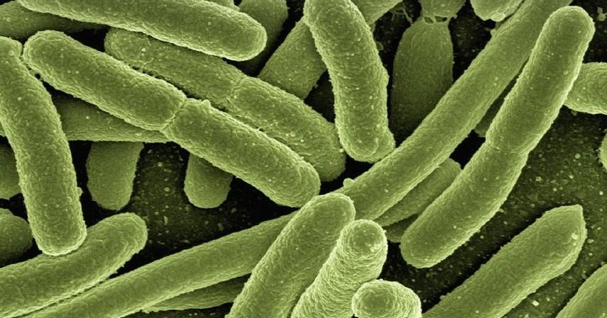 Manfaat Oregano untuk Kesehatan - Mencegah Infeksi Bakteri