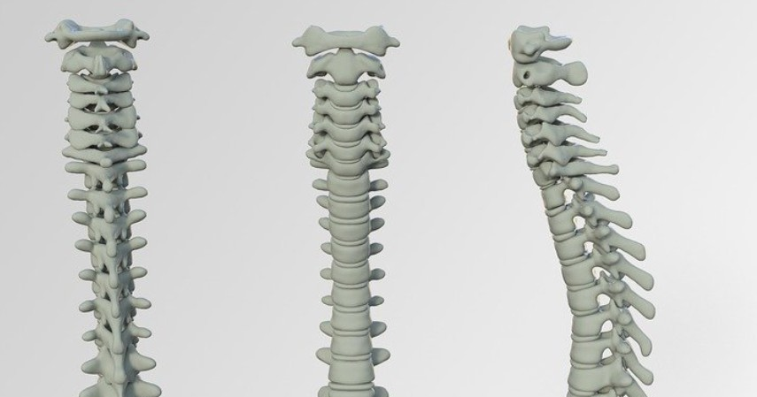 Manfaat Oregano untuk Kesehatan - Mengatasi Osteoporosis
