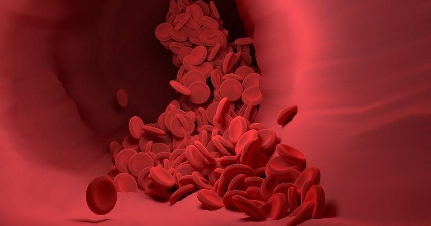 Manfaat Susu Kedelai - Mengoptimalkan fungsi sel darah merah