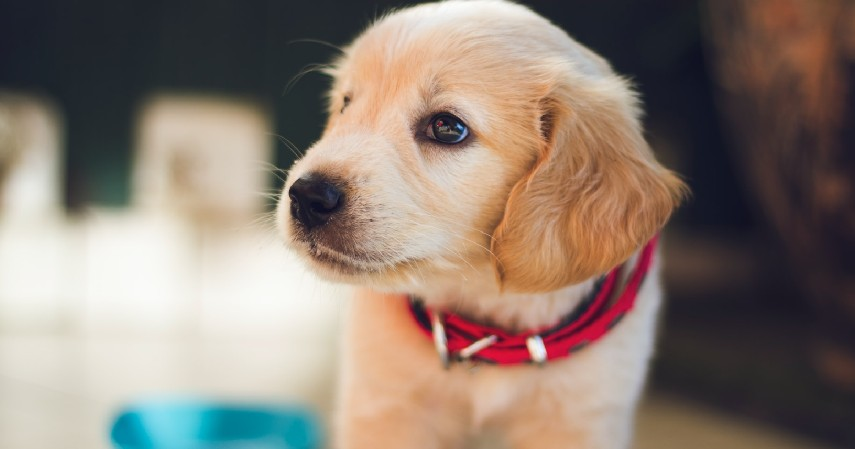 Mempertimbangkan Kesanggupan - 7 Tips Memilih Anjing Peliharaan untuk Pemula