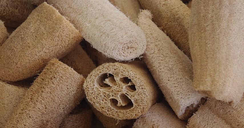Spons Loofah - 7 Peralatan Mandi Ramah Lingkungan Bebas Plastik