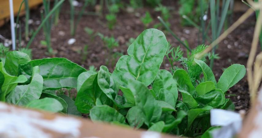 Sukses Budidaya Sayuran Organik dengan Beberapa Tips Berikut Ini - Memilih Tanaman yang Tepat