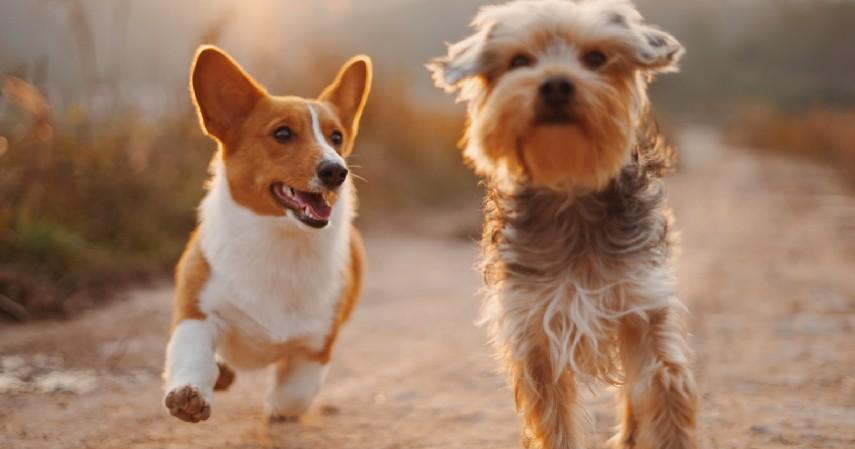 Ukuran Anjing - 7 Tips Memilih Anjing Peliharaan untuk Pemula