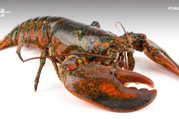 10 Manfaat Lobster untuk Kesehatan, Salah Satunya Jaga Imunitas Tubuh