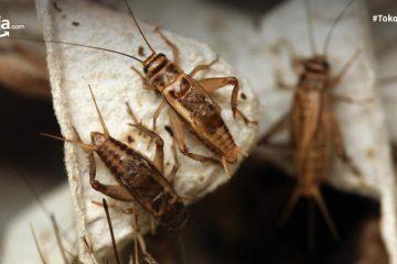 4 Peluang Usaha Ternak Serangga, Omzetnya Bikin Ngiler
