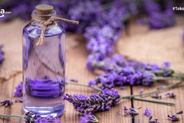 12 Jenis Tanaman Aromaterapi yang Membawa Segudang Manfaat