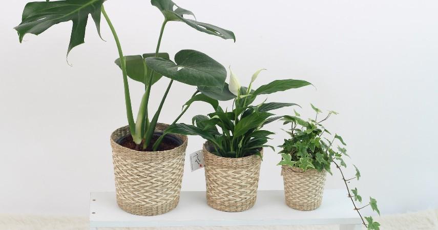 Bisnis tanaman hias - 10 Ide Usaha Modal Kecil untuk Ibu Rumah Tangga
